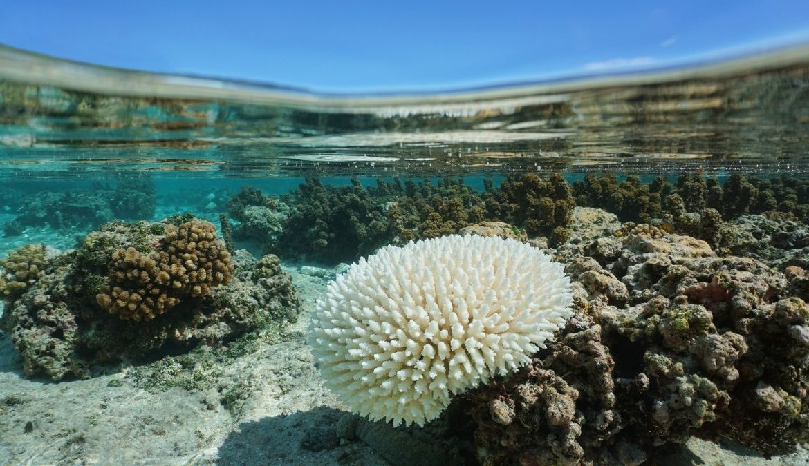 Direct Sunlight Increases Intensity Of Coral Bleaching: Study