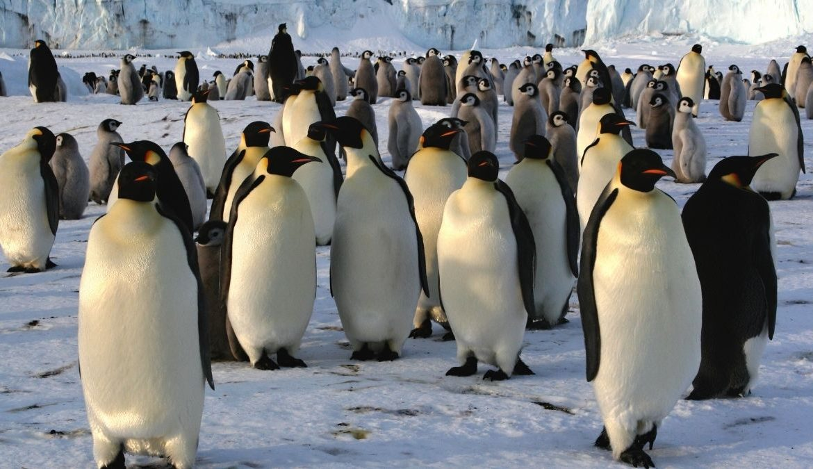 Scientists Discover New Penguin Colonies From Space